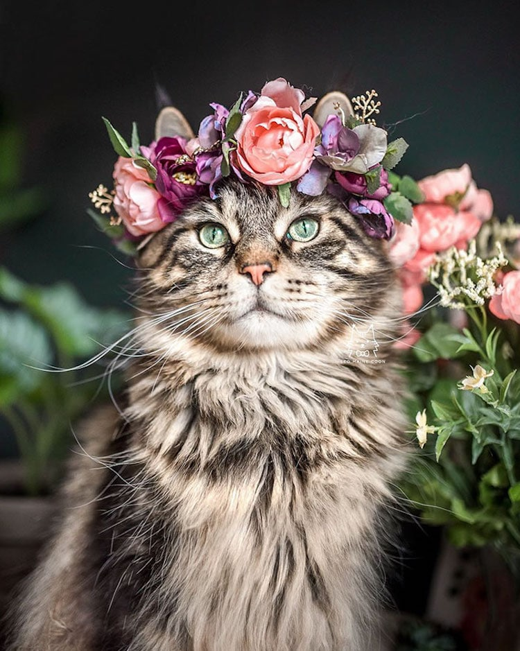 beautiful flower crown pet accessories freyas floral company