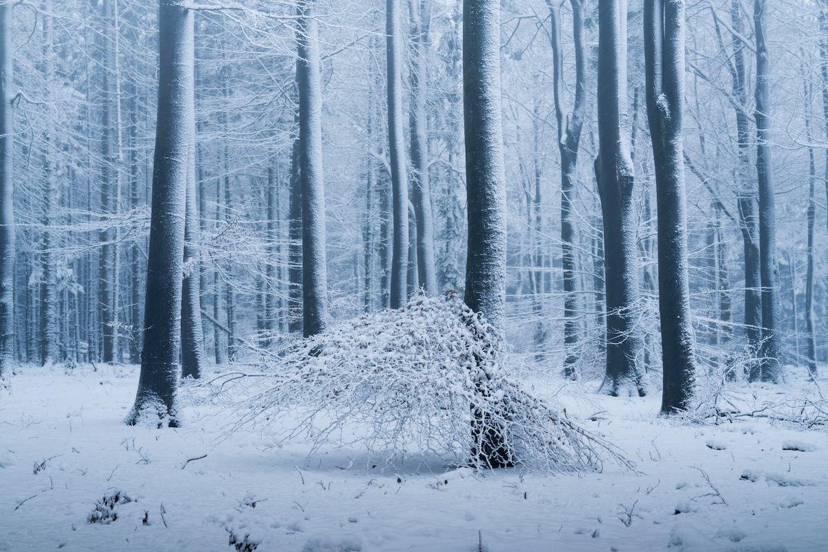 beautiful winter season forest photo albert dros
