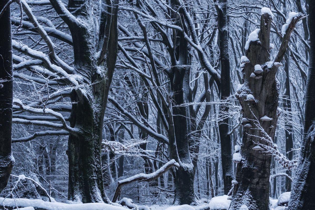 beautiful winter season speulderbos forest image albert dros