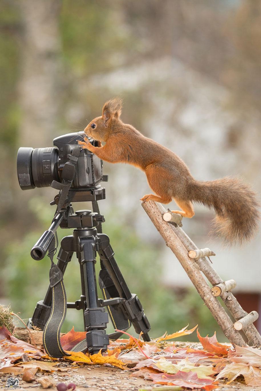 hilarious animal and camera photo