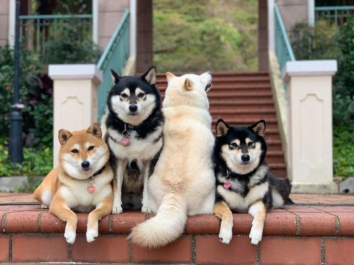 funny dog group photos