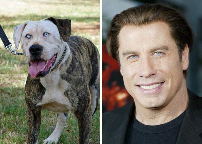 funny lookalike animal and celebrity john travolta