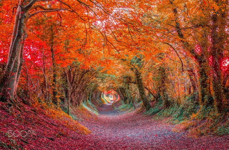beautiful garden tunnel anthony melendrez