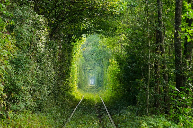 beautiful garden tunnel ukraine sergey miroshnik