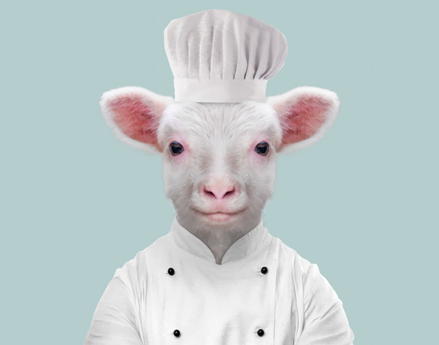 funny animal photo manipulation sheep yago partal
