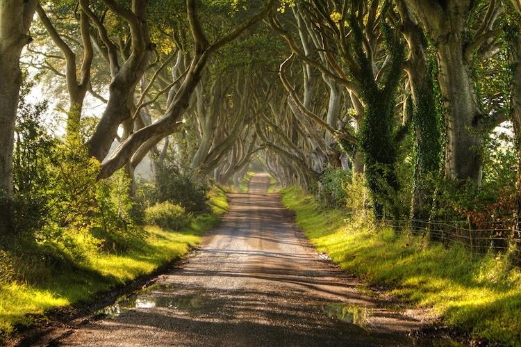 beautiful garden tunnel ireland chris tait