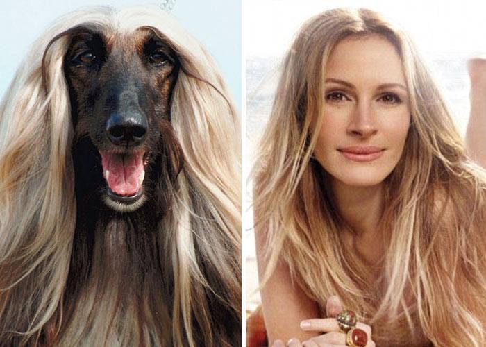 funny lookalike animal and celebrity julia roberts