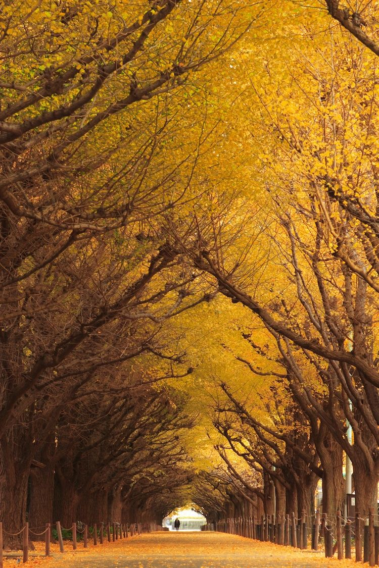 beautiful garden tunnel tokyo mrhayata