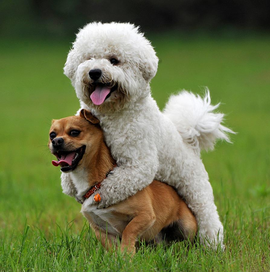 funny hitchhiking dog photo