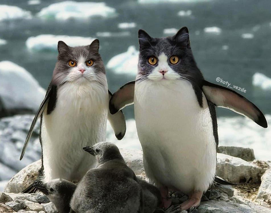 funny photo manipulation cat face galina bugaevskaya
