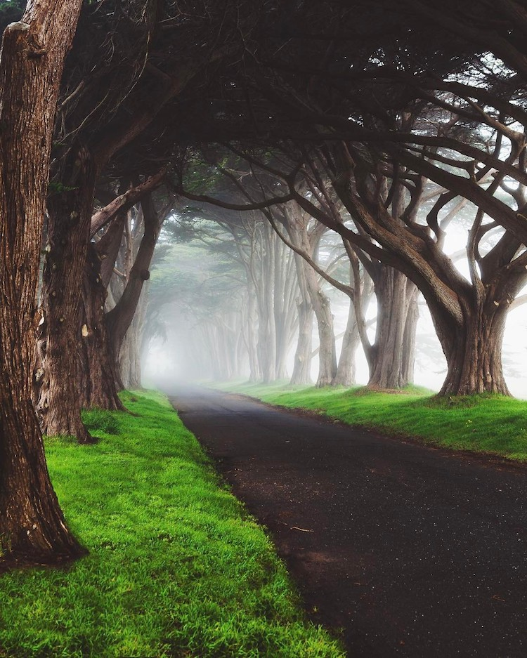 beautiful cypress tree tunnel california zeek yan