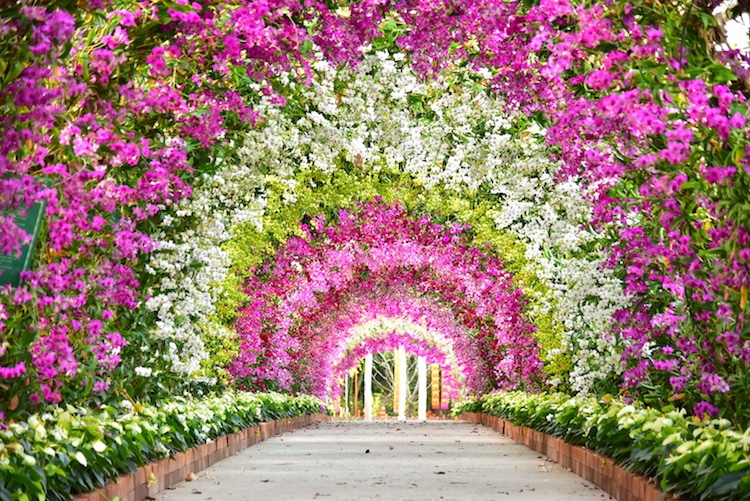 beautiful garden tunnel doodee studio