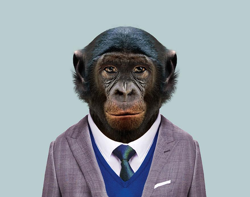funny animal photo manipulation bonobo yago partal