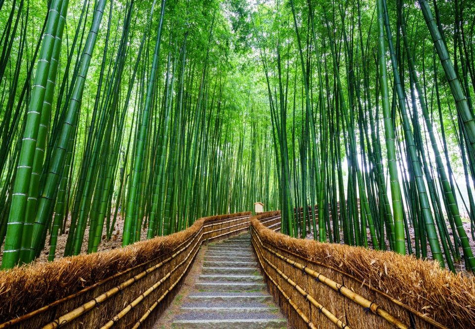 beautiful arashiyama bamboo tunnel japan noppakun wiropart