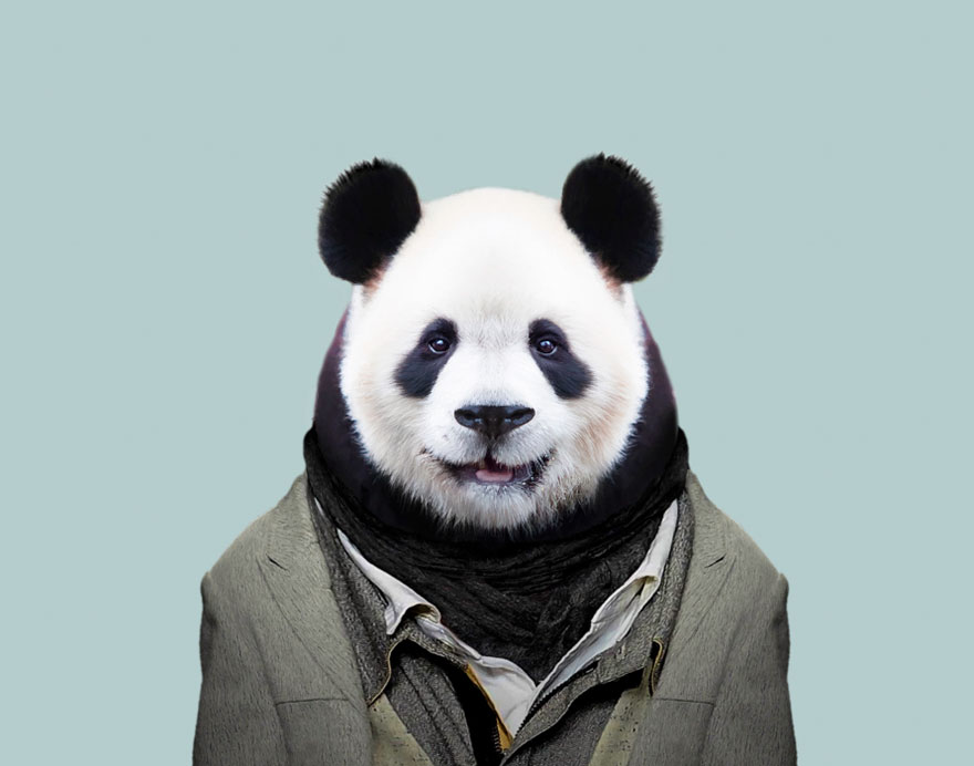 funny animal photo manipulation giant panda yago partal