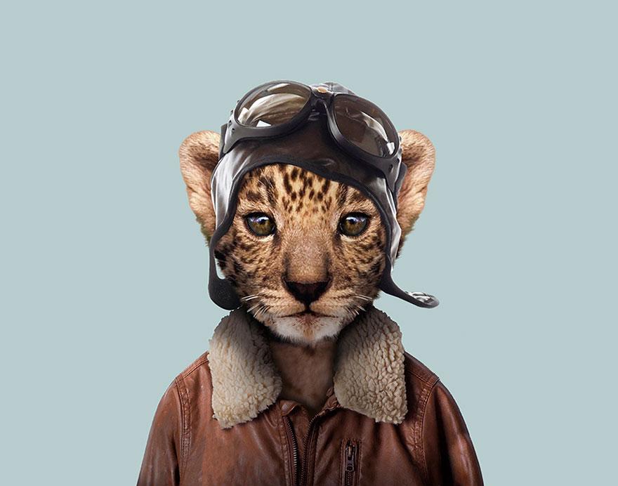 funny animal photo manipulation leopard yago partal