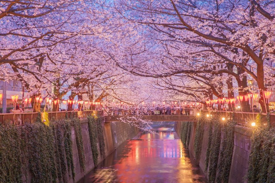 beautiful sakura tunnel japan sakarin sawasdinaka