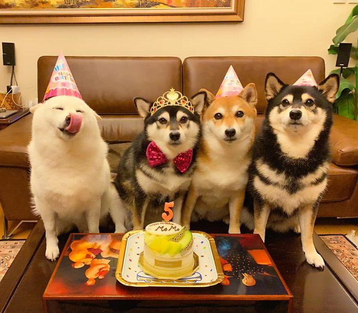 funny dog group photos
