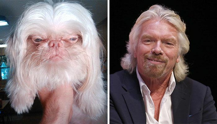 funny lookalike animal and celebrity richard branson