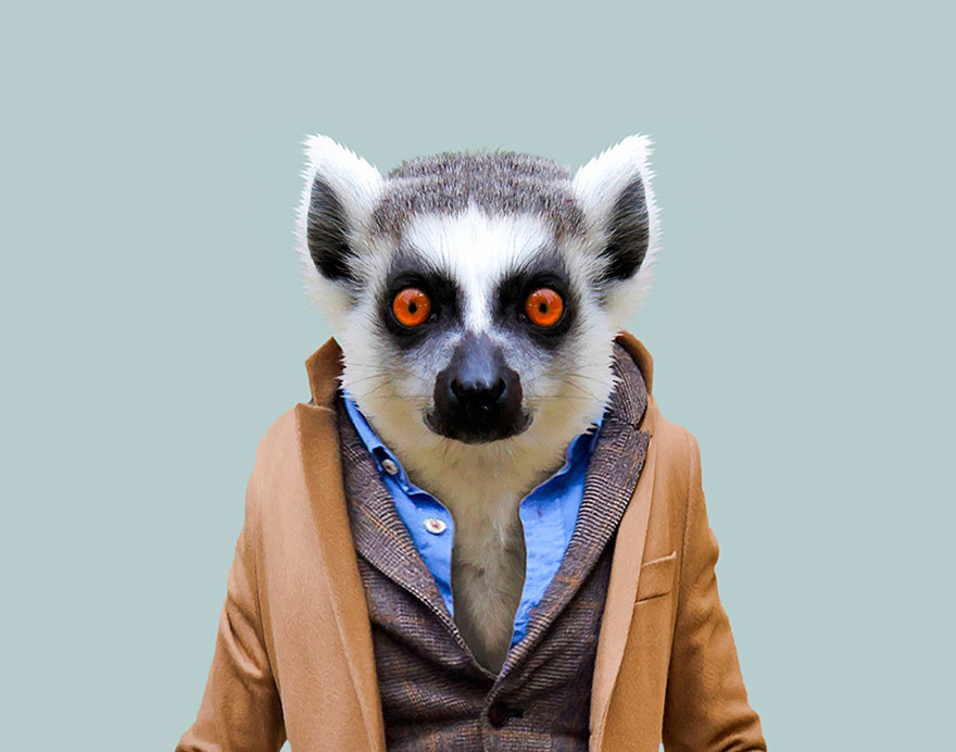 funny animal photo manipulation lemur yago partal