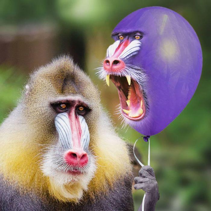funny photo manipulation animal things david staffell