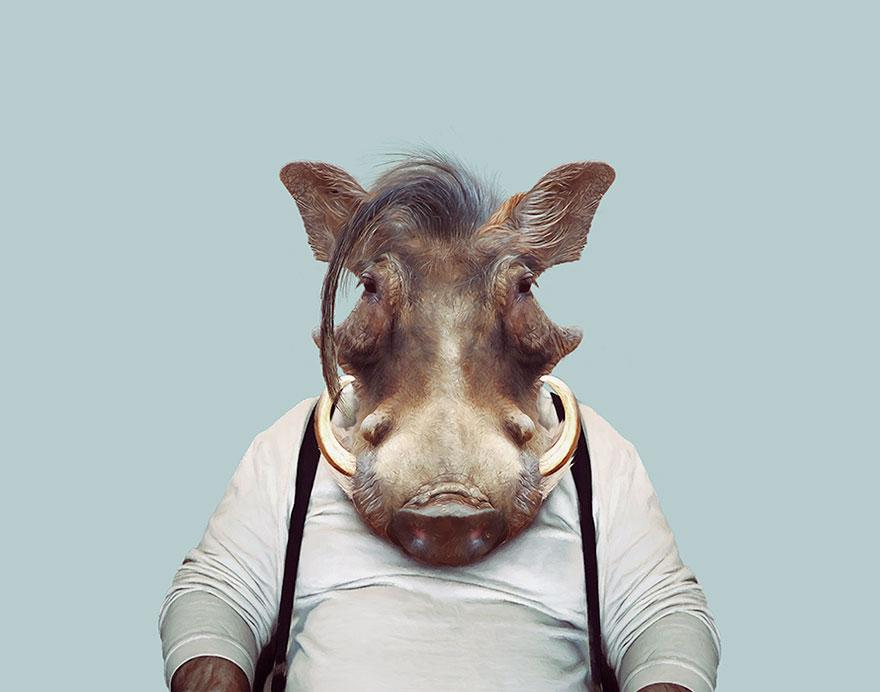 funny animal photo manipulation warthog yago partal
