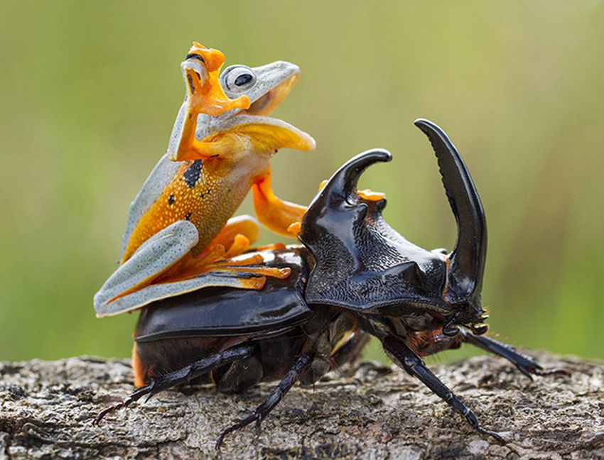 funny hitchhiking snail frog beetle photo