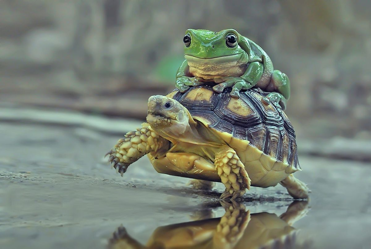 funny hitchhiking snail frog tortoise photo
