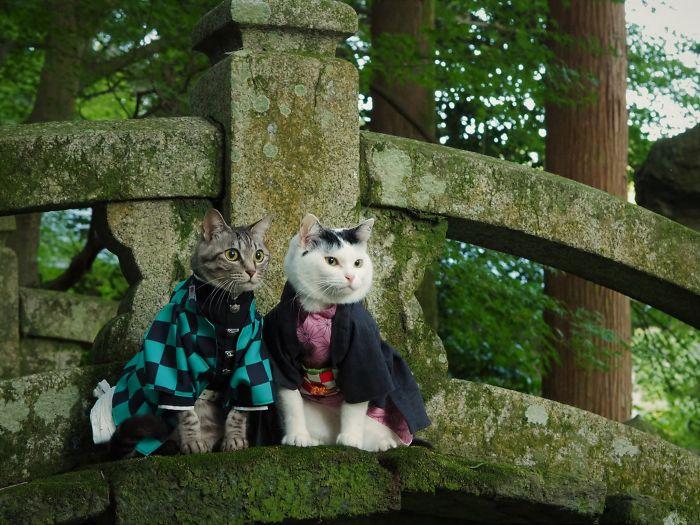 beautiful cat costume yagyouneko