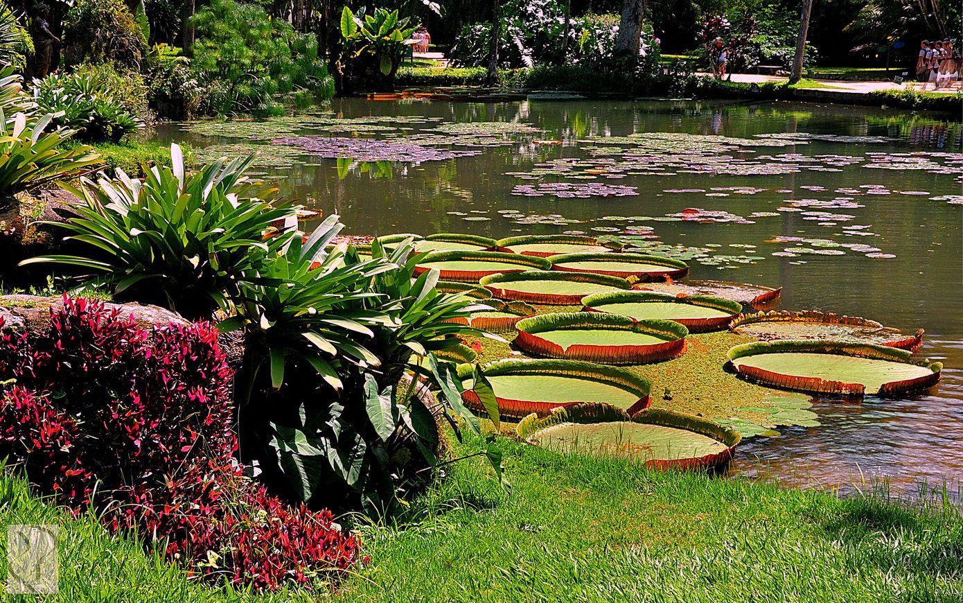beautiful jardim botanico garden image rio de janeiro