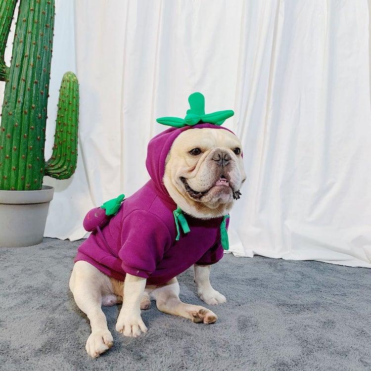 funny halloween pet costume eggplant dog