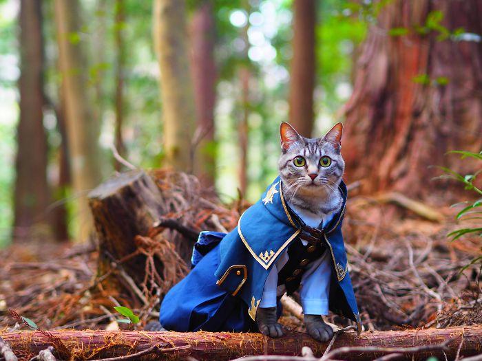 funny cat costume yagyouneko