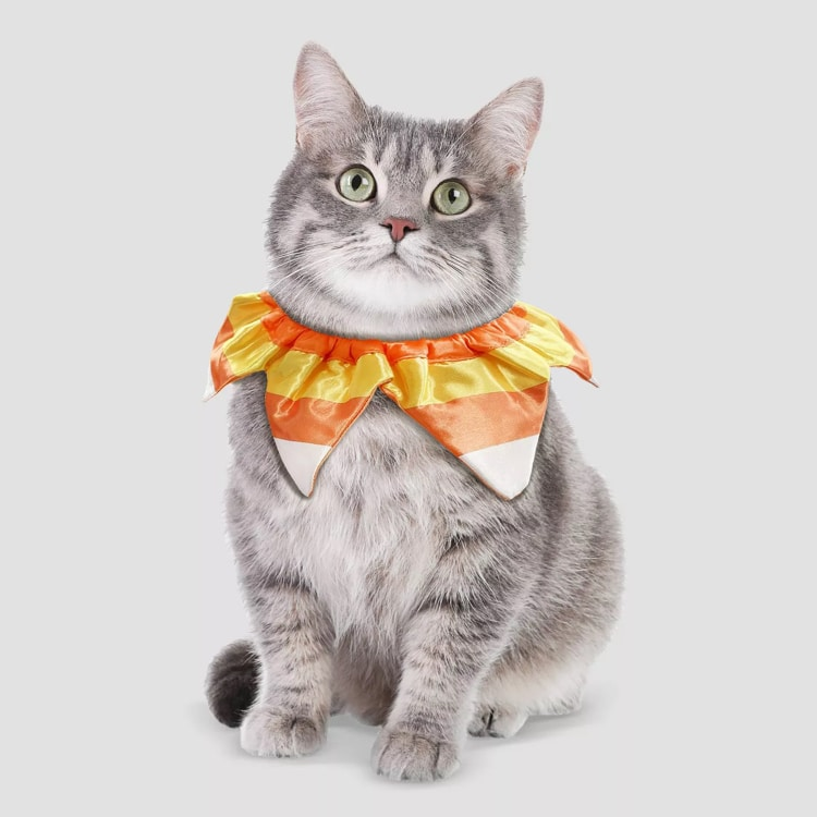 adorable halloween pet costume candy cat
