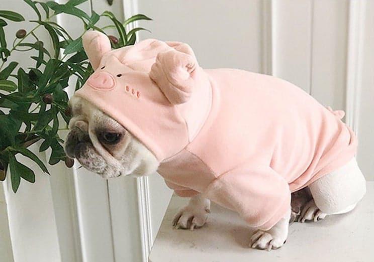 admirable halloween pet costume pig dog
