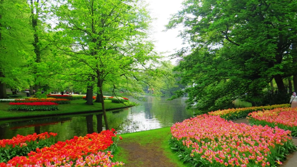 beautiful keukenhof garden image netherlands jorge antonio gearcia