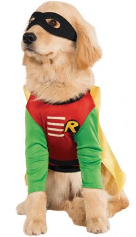 funny halloween pet costume robin superhero dog