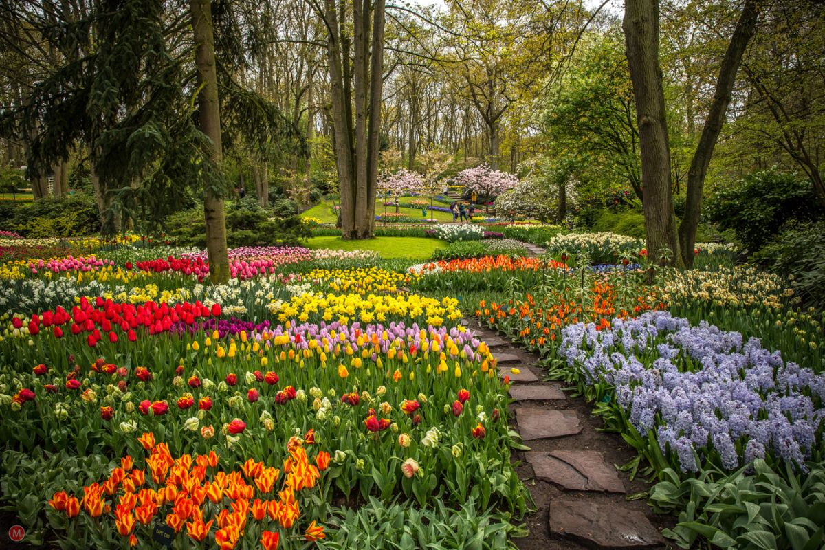 beautiful keukenhof garden image netherlands mike llchenko