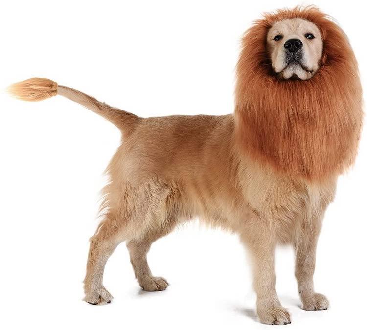 funny halloween pet costume lion dog