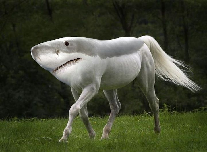 funny animal photo morphing redditor gyyp