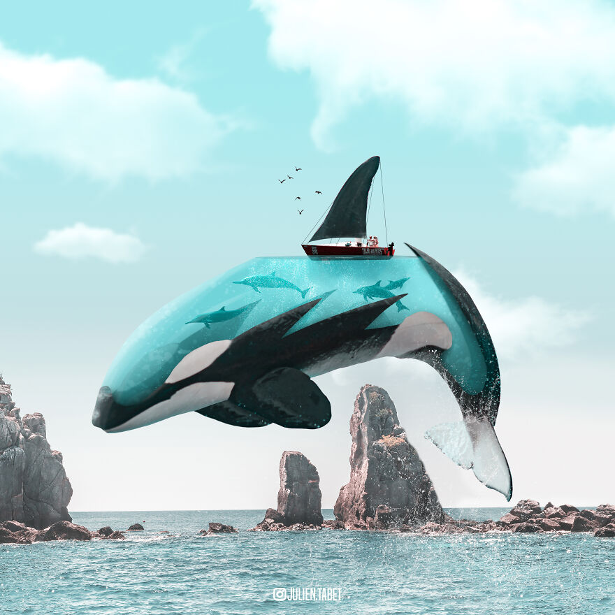 funny animal photoshop works whale julien tabet