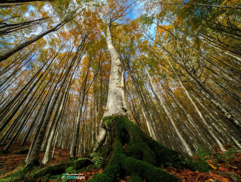 beautiful forest trees photo manuelo bececco