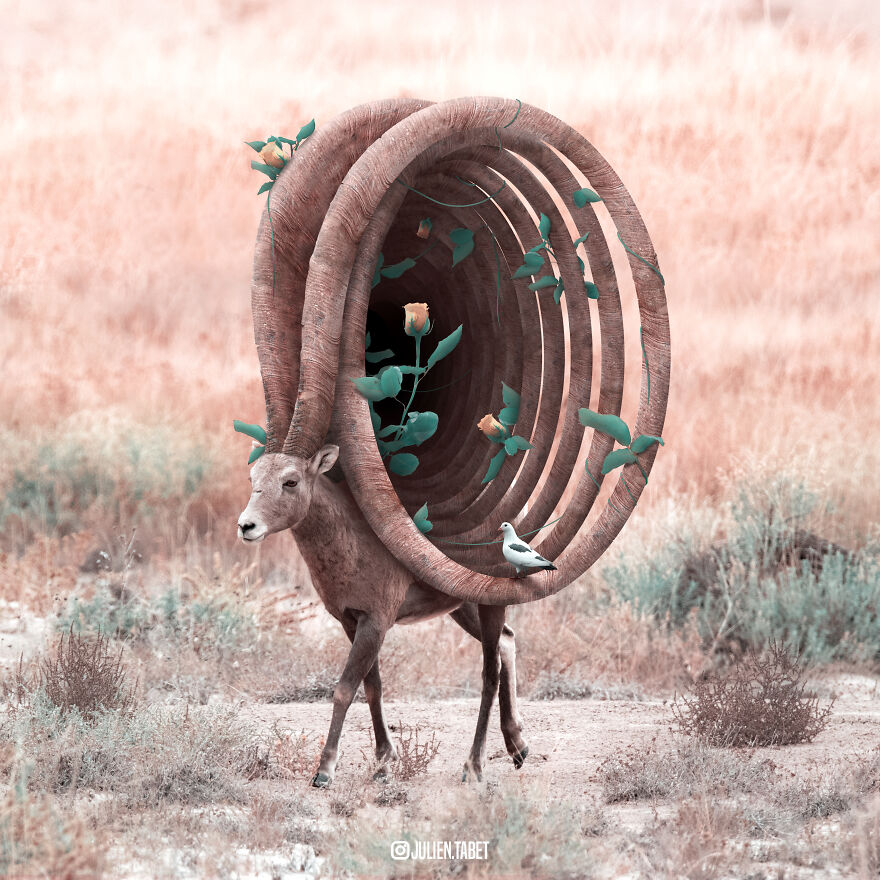 funny animal photo manipulation deer julien tabet