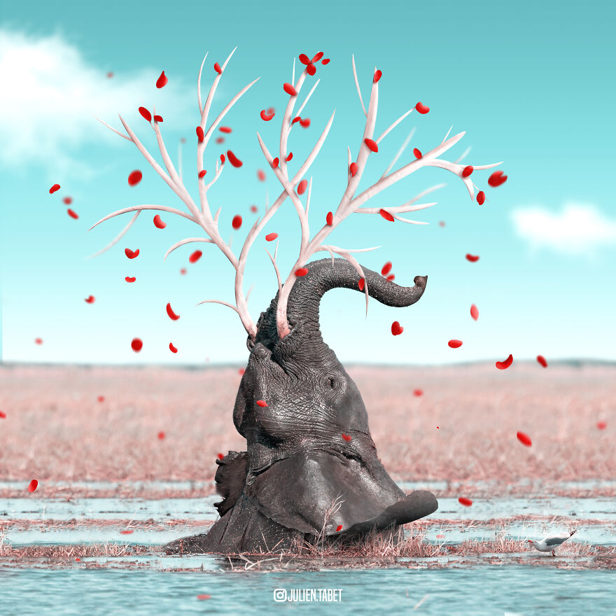 funny animal photo manipulation elephant julien tabet