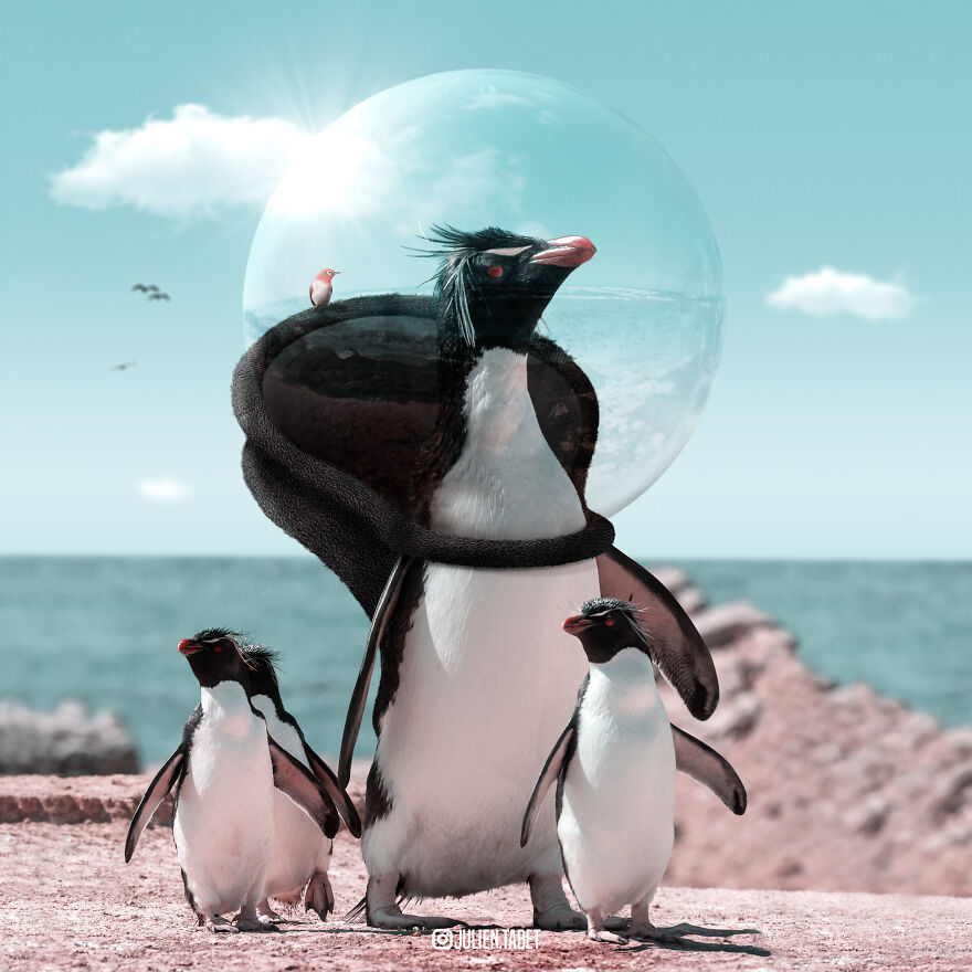 funny animal photoshop works penguin julien tabet