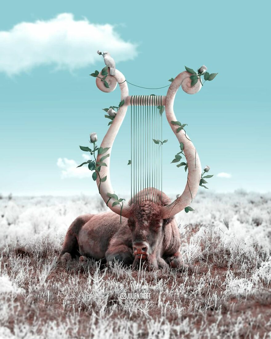 funny animal photo manipulation julien tabet