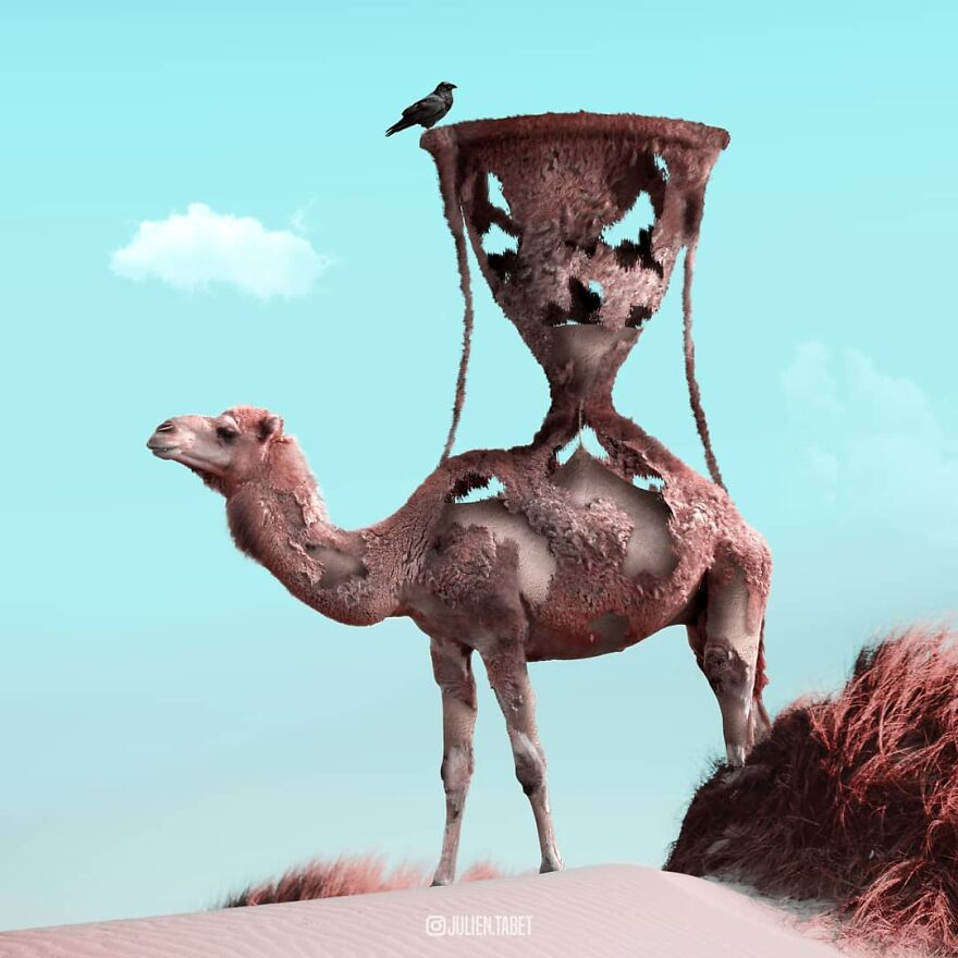 funny animal photo manipulation camel julien tabet
