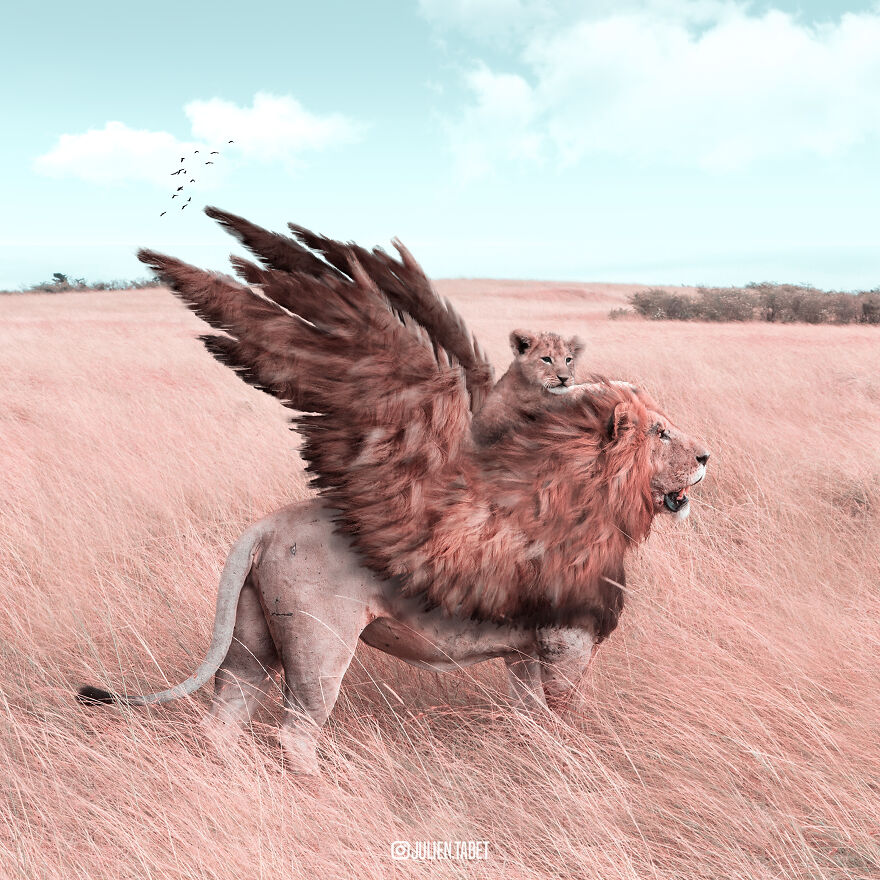 funny animal photo manipulation lion julien tabet
