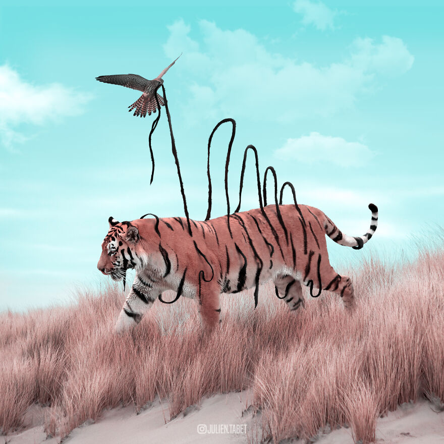 funny animal photo manipulation tiger julien tabet