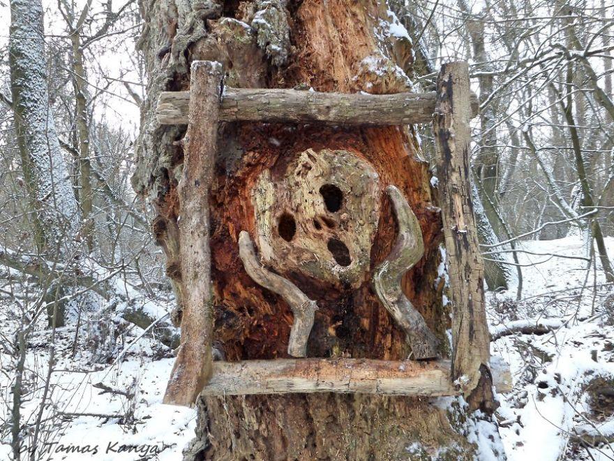 weird sculpture driftwood tamas kanya
