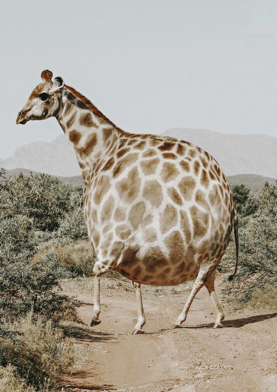 aniballs photo manipulation giraffe aditya aryanto